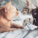 エッセイ「私と猫と、愛のこと」by 安藤エヌ